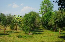 ขายที่ดิน 59ไร่ 2งาน ในเมือง จ.อุตรดิตถ์ สำหรับการลงทุนเพื่อหมู่บ้านจัดสรร
