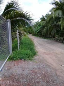 ขายที่ดิน สวนมะพร้าวน้ำหอม เก็บผลผลิตได้เลย ประมาณ 300 ต้น จำนวน 7ไร่ ราคา 6.7 ล้านบาท
