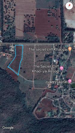 ขายด่วน ที่ดิน+สวนทุเรียน ทุเรียน 300 ต้น กิ่งพันธุ์ทุเรียนนนทบุรี 13 ไร่ 22 ตรว เจ้าของขายเอง ปากช่อง นครราชสีมา