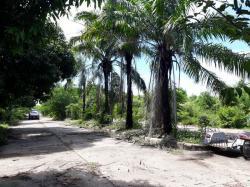 ขายที่ดิน 100 ไร่ อยู่ติดชุมชนบ้านปากบึง อำเภอจอมบึง จังหวัดราชบุรี