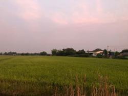 ขายที่ดิน 30 ไร่ (โฉนด 5 ใบ) อ.บางเลน นครปฐม เหมาะสร้างบ้านอยู่อาศัยหรือทำการเกษตร