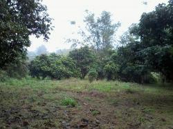 ที่ดินสวยเชียงราย ต.ห้วยสัก วิวเนินเขา 4 ไร่ 3 งาน 58.9 ตรว. พร้อมต้นสักประมาณ 300 ต้น และสวนผลไม้