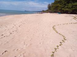 ขาย/ให้เช่า ที่ดินติดทะเล สวยมาก น้ำเป็นธรรมชาติ สีชล นครศรีธรรมราช