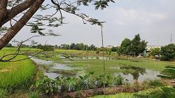 ขายด่วน ที่ดินเปล่าสภาพเดิม ขุดเป็นล่องสวน ปลูกต้นไม้ล้อมรอบ แบ่งขายเนื้อที่ 1-2 ไร่ ใกล้สำนักงานเทศบาลตำบลเสาธงหิน จังหวัดนนทบุรี