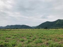 ที่ดินแบ่งขาย วิวภูเขาโครงการชั่งหัวมัน จ.เพชรบุรี