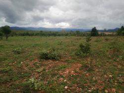 ขายที่ดินราคาต่ำกว่าราคาประเมินที่ดิน เหมาะสำหรับสร้างป่าหรือพืชไร่ จ. ตาก