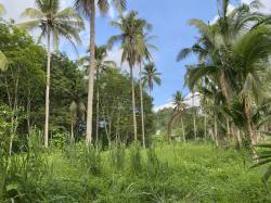 ขายที่ดิน ทำเลดี พร้อมสวนมะพร้าว รายได้เดือนละ 3,000-6,000 บาท จังหวัดประจวบคีรีขันธ์