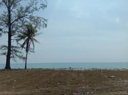 ขายที่ดินติดทะเล หาดเสาเถา นครศรีธรรมราช (เจ้าของขายเอง) โทร 081 424 8859