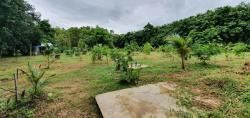 เจ้าของขายเอง ที่ดินสวนมะพร้าว จังหวัดน่าน มีน้ำ+ไฟพร้อม ใกล้โรงเรียน โรงพยาบาล