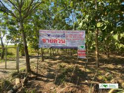 ขายที่ดิน+สวนยางพารา+สวนอ้อย 38-0-43 ไร่ ต.ท่าสวรรค์ อ.นาด้วง จ.เลย