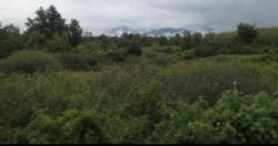 ขายที่ดินสวย เทือกเขาน้ำหนาว