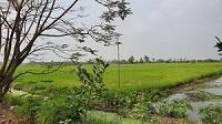 ขายที่ดินเปล่าสภาพเดิม ขุดเป็นล่องสวน ปลูกต้นไม้ล้อมรอบ 1-2 ไร่ นนทบุรี