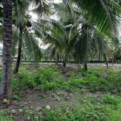 ขายด่วน ที่ดิน 2 ไร่  บ้านเกาะ สมุทรสาคร