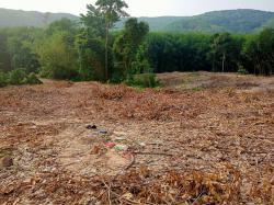 ขายที่ดินราคาถูกเพื่อทำสวนผลไม้เช่นทุเรียนหรือตามที่ต้องการพร้อมดูแลฟรี4ปี แกลง ระยอง โทร 081 851 7583