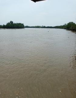 ขายที่ดินติดแม่น้ำบางปะกง 3 ไร่เศษ (ฝั่งงอก) อ.บางคล้า จ.ฉะเชิงเทรา