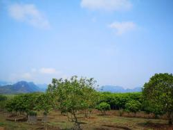 เจ้าของขายเอง ที่ดินโฉนด แบ่งขาย พร้อมสวนผลไม้ ต.ท่าขนุน อ.ทองผาภูมิ จ.กาญจนบุรี