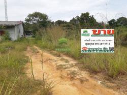 ขายด่วน ที่ดินเปล่า นิคมแว้ง นราธิวาส เนื้อที่ 75 ตร.ว ทำเลดี เหมาะพักอาศัย