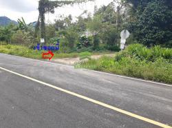 ขายด่วน ที่ดินเปล่า บ้านไทยยืนยง โละจูด แว้ง นราธิวาส เนื้อที่ 51-0-37 ไร่ ทำเลดี
